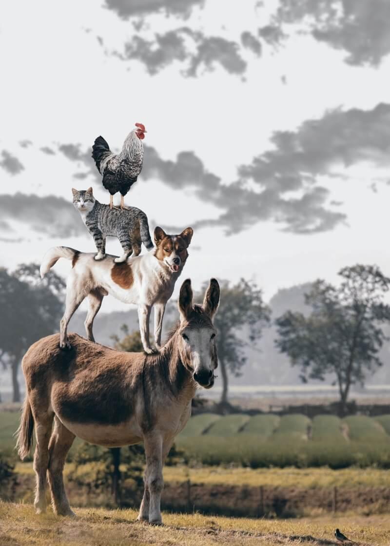 Pause philo «L'Homme a-t-il des devoirs envers les animaux ?»